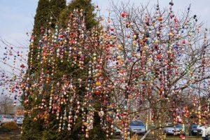 В Литве вандалы спилили самое красивое пасхальное дерево страны