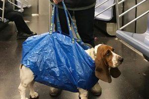Пес в мешке, или как в Нью-Йорке перевозят животных