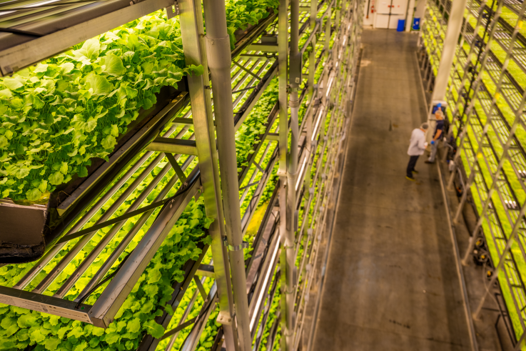 Сингапурские авиалинии будут кормить пассажиров органическими овощами