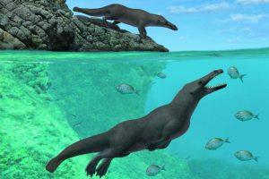 В Перу палеонтологи нашли четвероногого кита, похожего на выдру