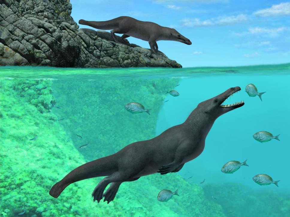 В Перу палеонтологи нашли четвероногого кита, похожего на выдру.Вокруг Света. Украина