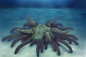 Палеонтологи назвали предка морских ежей в честь злобного божества Лавкрафта
