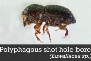 Крошечный жук уничтожает леса Южной Африки, и никто не знает, как это остановить