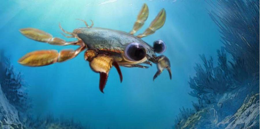 Ученые открыли вымершего краба с огромными глазами