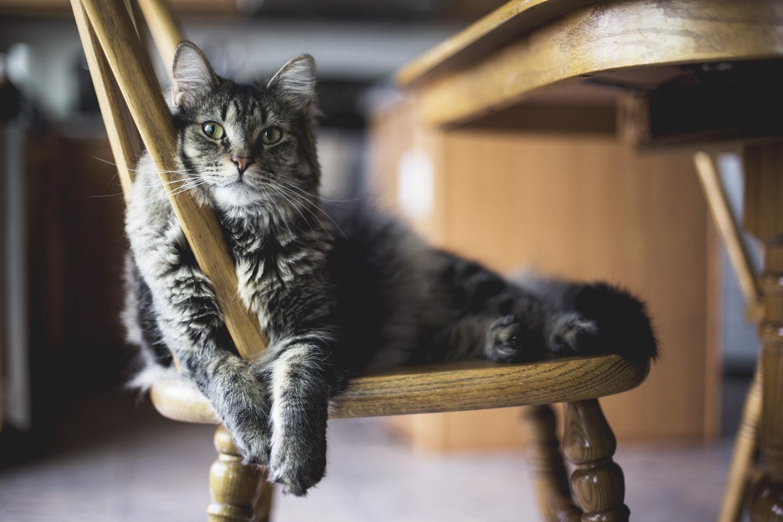 Ученые доказали, что кошки умеют распознавать свое имя