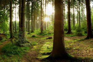 В украинских лесах начался «сезон тишины»