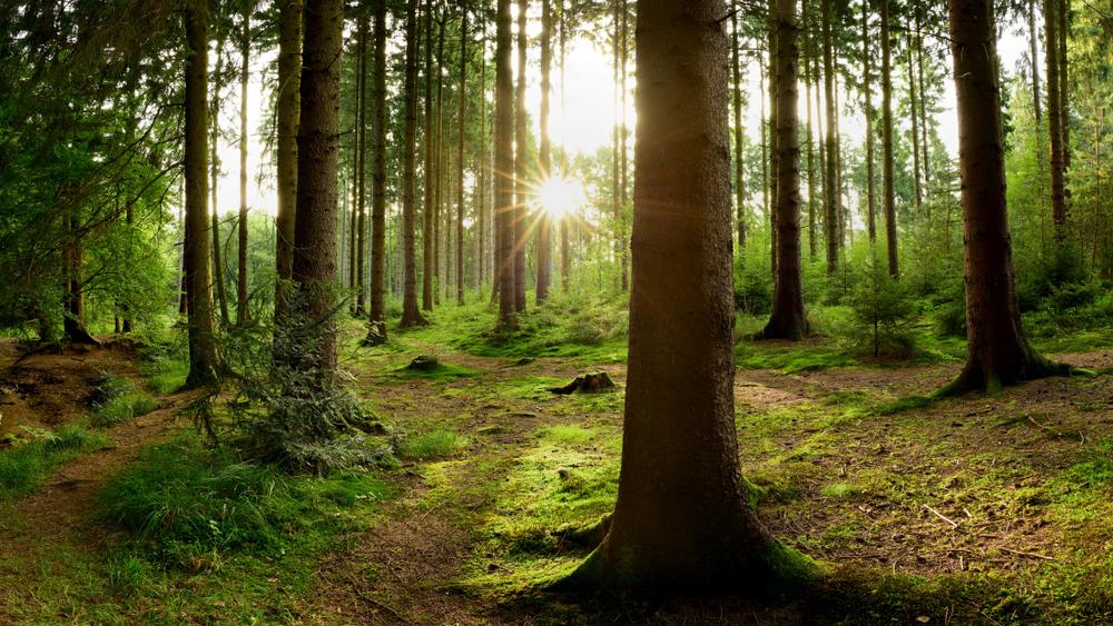 В украинских лесах начался «сезон тишины».Вокруг Света. Украина