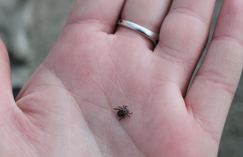 Европу атакуют зараженные комары и клещи