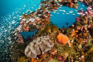 Число малышей-кораллов у Большого Барьерного рифа упало на 90%