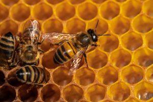Почему пчелы строят шестиугольные соты?