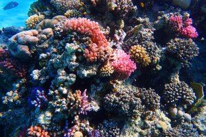 В ОАЭ появятся крупнейшие в мире искусственные коралловые сады
