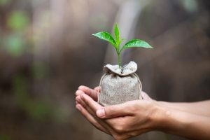 Ученые нашли способ сделать растения устойчивыми к изменениям климата