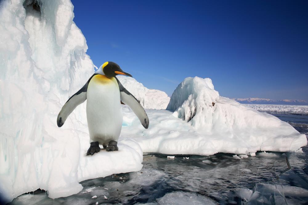 Крушение ледника в Антарктиде погубило тысячи императорских пингвинов
