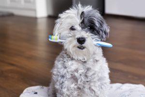 Кто придумал зубную щетку?