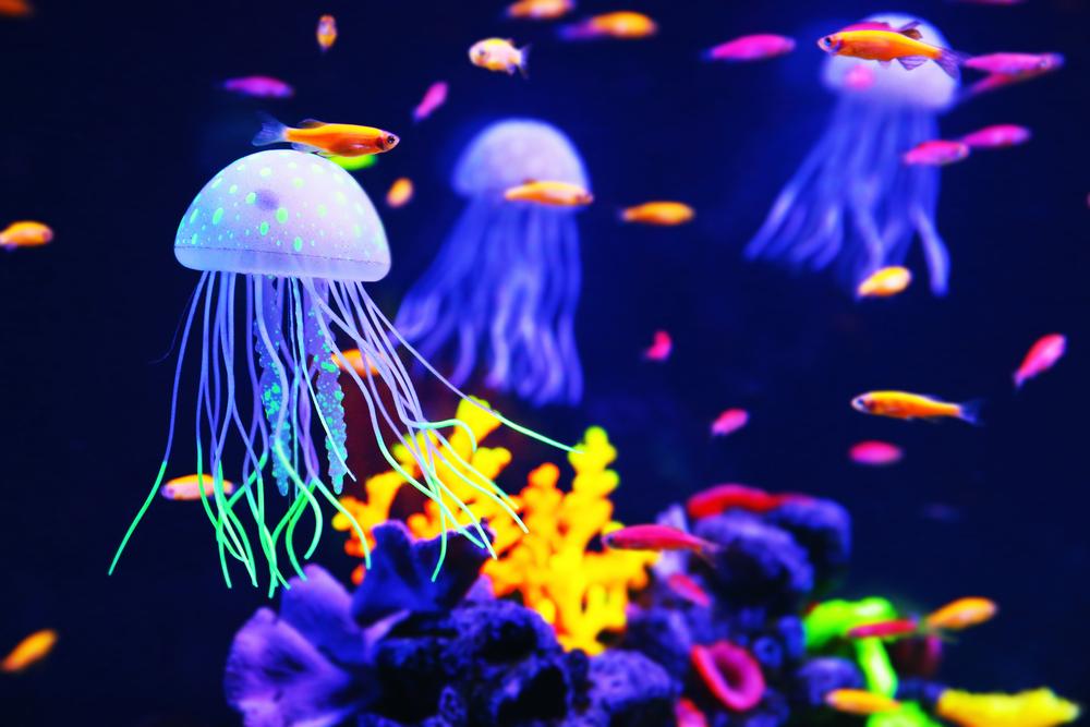 Морские животные исчезают вдвое быстрее, чем наземные виды