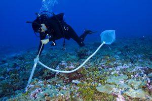В океане нашли 200 тысяч видов вирусов