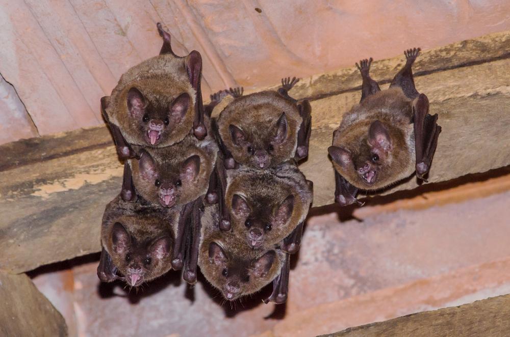 День летучих мышей: так вот ты какой, загадочный зверек!.Вокруг Света. Украина