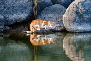 В Австралии собираются убить около двух миллионов кошек