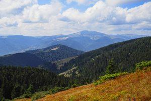 В Украине созданы и расширены 13 природных заповедников
