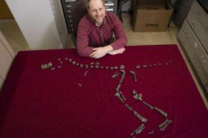 Окаменелость, найденную школьником, идентифицировали как тираннозавроида