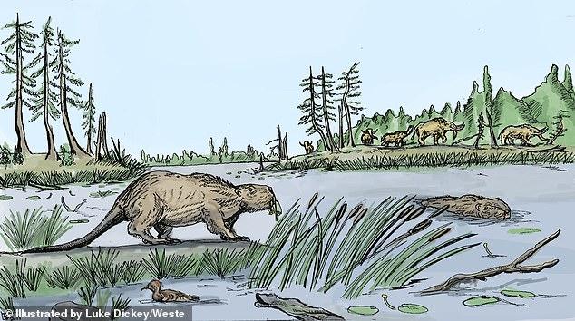 Палеонтологи объяснили, почему вымерли гигантские бобры Северной Америки