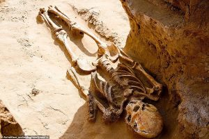 В России фермер нашел 2000-летний скелет сармата и золотые драгоценности