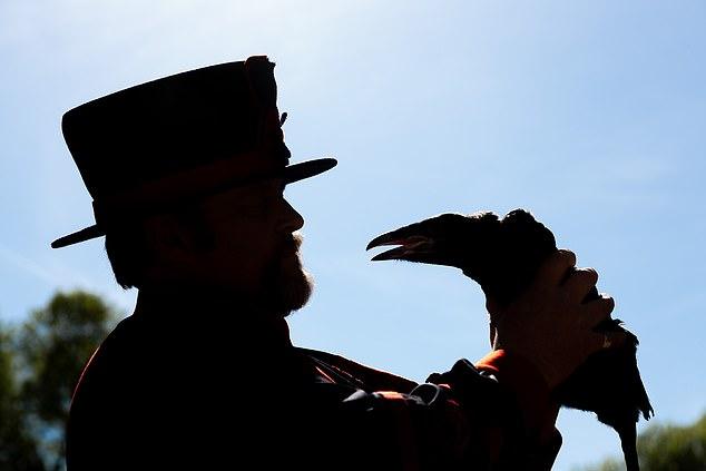 У черных воронов Тауэра впервые за 30 лет появились птенцы.Вокруг Света. Украина