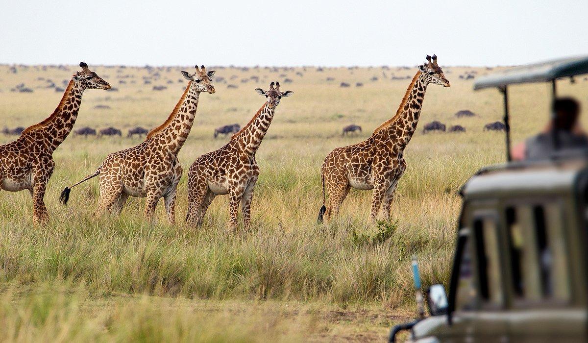 экспедиция жирафы