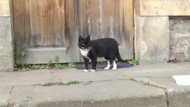 Кот прошел 300 километров, чтобы вернуться домой
