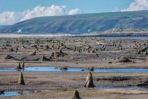 В Уэльсе обнаружили окаменелости древнего леса