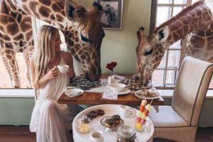 В Кении предлагают позавтракать с жирафами