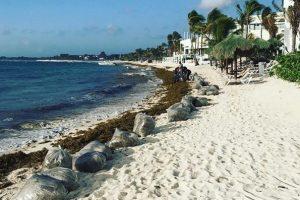 Пляжи знаменитых мексиканских курортов завалило водорослями
