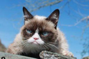 Умерла самая сердитая кошка в мире Grumpy Cat