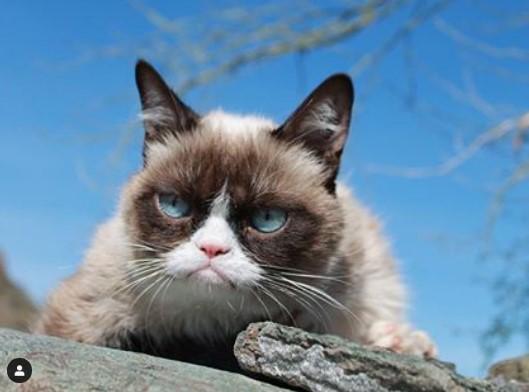 Умерла самая сердитая кошка в мире Grumpy Cat.Вокруг Света. Украина