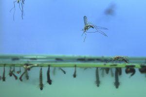 Алжир и Аргентина объявлены свободными от малярии