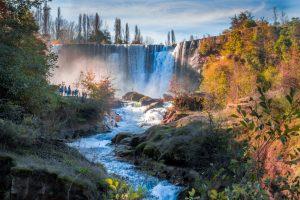 В Чили ученые нашли лес вымирающих деревьев