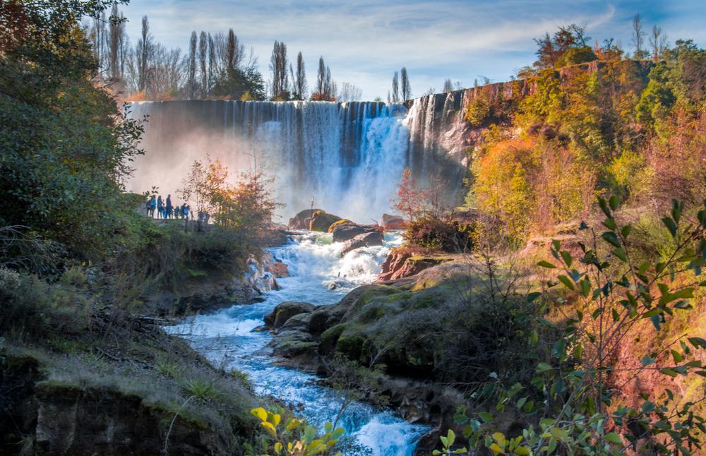 В Чили ученые нашли лес вымирающих деревьев.Вокруг Света. Украина