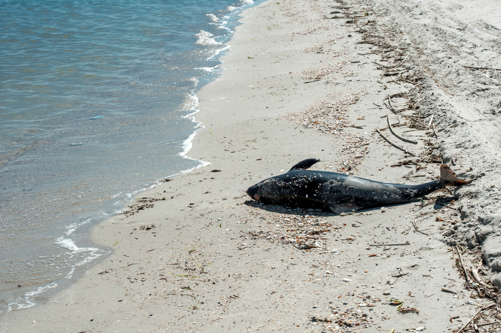 На пляжи в районе Бердянска море вынесло мертвых дельфинов