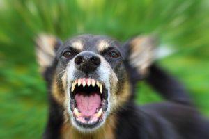 Симптомы бешенства. Что делать, если вас покусало животное?