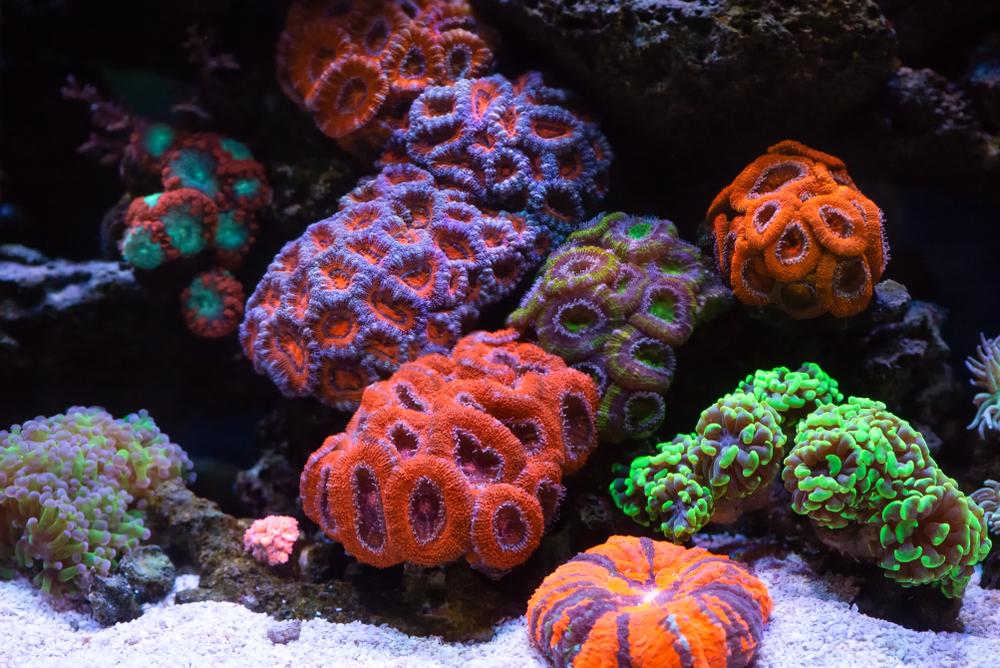 400 лет Эль-Ниньо: ученые расшифровали летопись тихоокеанских кораллов