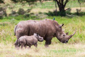 Большие животные вымрут, а маленькие - останутся: что ждет природу в следующем веке