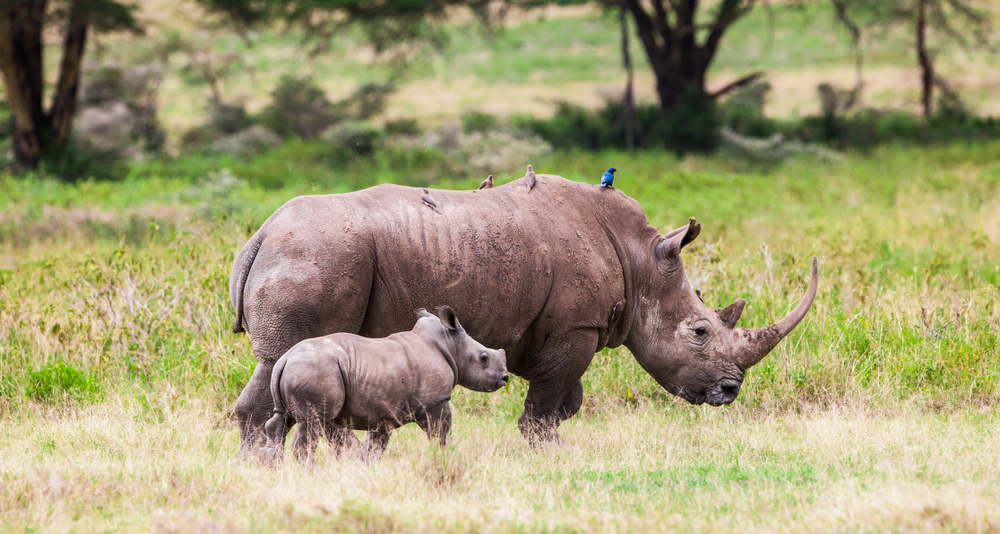 Большие животные вымрут, маленькие останутся: что ждет природу в XXII веке