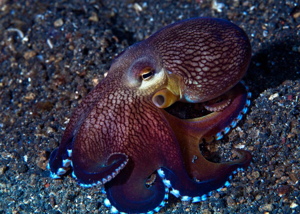 Осьминоги могут ослепнуть из-за изменений климата