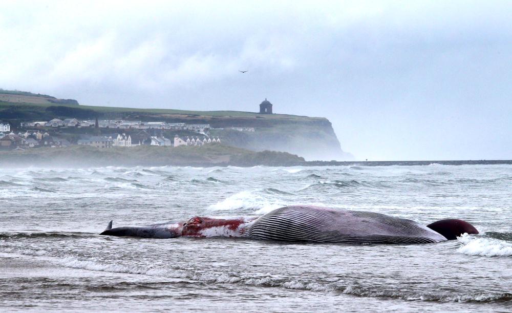 К берегу Сан-Франциско прибило девятого мертвого кита