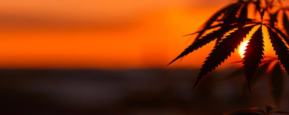 В Таиланде туристам разрешили лечиться марихуаной