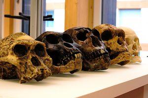 Неандертальцы и Хомо сапиенс разделились 800 тысяч лет назад: новое исследование