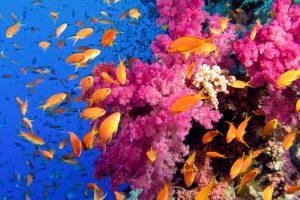 На Гавайях нашли кораллы, которым нравится глобальное потепление