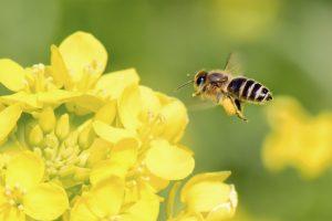 В Одесской области погибли миллионы пчел