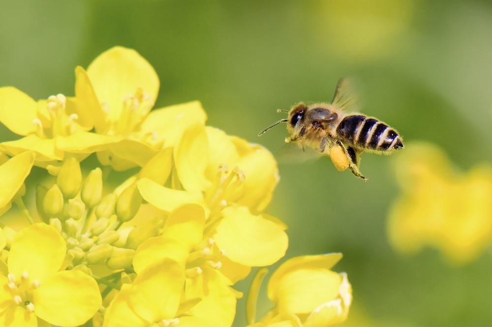 В Одесской области погибли миллионы пчел.Вокруг Света. Украина