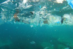 Пластик вредит бактерии, благодаря которой мы дышим